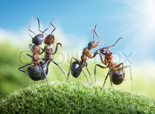 dancing under the sun ants know to play games, scientific fact