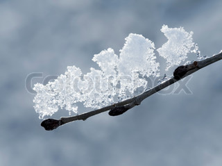 Early spring / late winter image of tree branch with melting snow