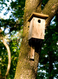 Very old small house for birds on a tree