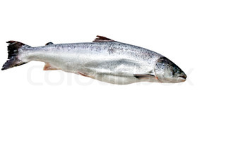 Fresh Salmon isolated on the white background