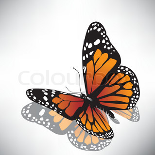vector butterfly orange Farbe