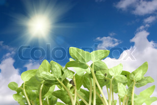Young plants grow towards the sun, blue sky and clouds