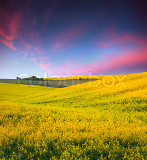 Summer Landscape with a field of yellow flowers