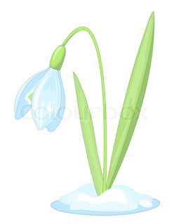 Snowdrop on the white background Vector illustration