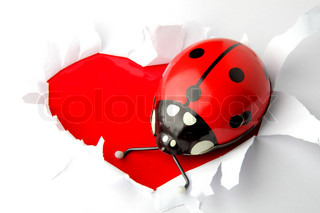 lady bird old toy as valentine heart background