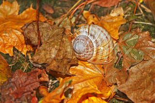 Details of autumn forest Shell on the falling leaves