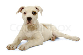 Puppy is resting on a white background