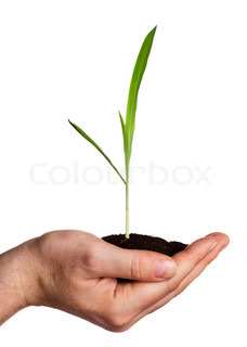 Young plant in hand - concept