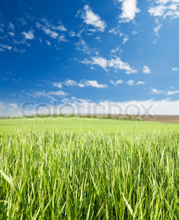 green grass and blue sky with clouds soft focus on grass