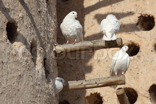 White doves at the pigeon tower in Doha, Qatar
