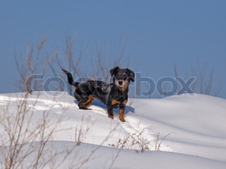 The small dog costs on a snowdrift
