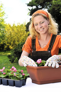 Ung kvinde - havearbejde - plantning begonia