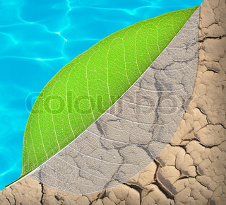 ecology life and water concept