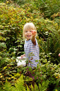 happy little girl picking raspberries in the woods