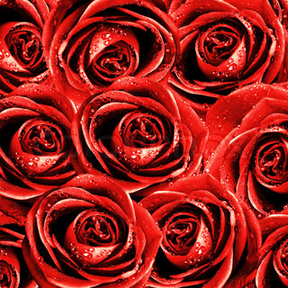 valentine's background with roses on grunge