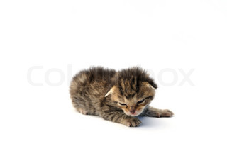 junge katze liegend wei er hintergrund isoliert stock foto colourbox. Black Bedroom Furniture Sets. Home Design Ideas