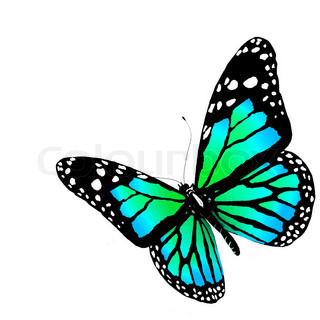Isolated butterfly on a white background