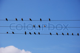 birds sitting and resting on electric wire
