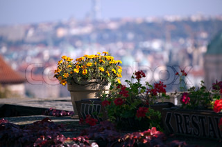 The View on the autumn Prague over flower, beautifull view