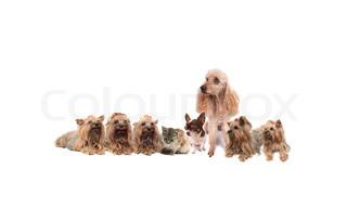 many cute dogs on the white background