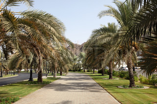 Alley with palm trees in Muscat, Sultanate of Oman