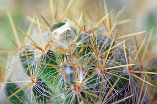 Abstract cactus spikes with waterdrops