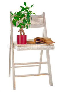 Bonsai ficus tree in flower pot, vintage book and old painted garden chair isolated on white background