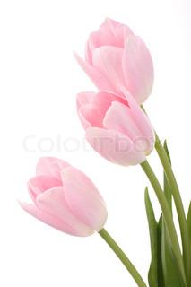 Billede af 'BUD, gaver, bloom'