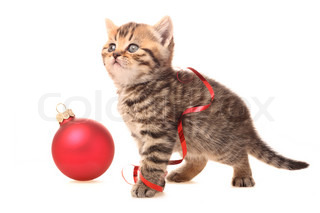 Kitten with Christmas Decorations on white background