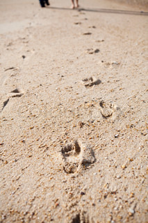 Close-up of footprints on sand, two people walking next to each other