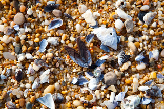 Close-up background of seashells on the sand on the beach