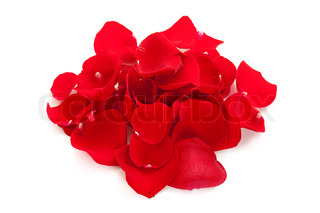 Heap of rose petals isolated on white