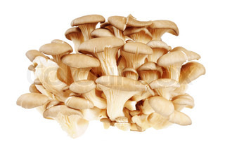 Bunch of mushrooms - Oyster mushrooms