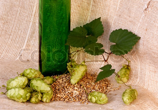 An image of pineals of hop and corn