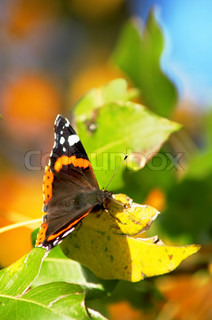 A butterfly sitting on a leaf