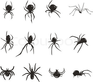 Black spider vector silhouette