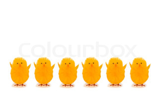 Yellow Easter chicks in a row with white background