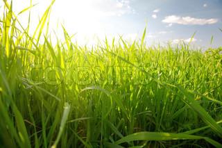 grønne sommer græs og sol