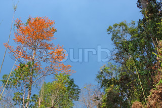 Sunny day in  Asian jungle in bloom