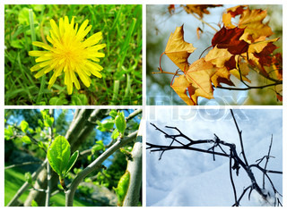 Collage of pictures representing all the four seasons
