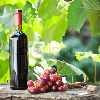 Red wine bottle and bunch of grapes on old wooden table against vineyard in summer