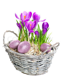 beautifil spring crocus flowers with easter eggs decoration