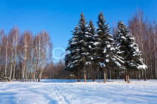 Beautiful winter landscape with snow, fir-trees and birches