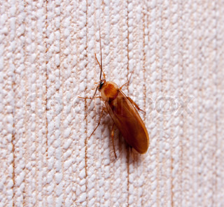 cockroach on the wall