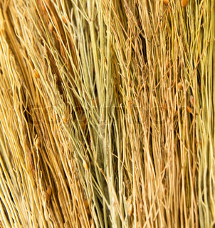 backgrounds texture of dry grass