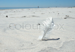 Soft Feather on White Sand Beach