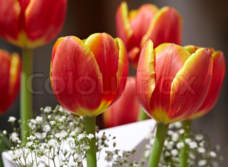 Bouquet Of Red & Yellow Tulips With White Holiday Greeting Card & Babys Breath Flowers