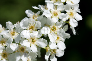 Beautiful white wild flowers.