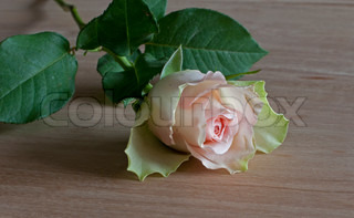 pink rose of love on wooden table
