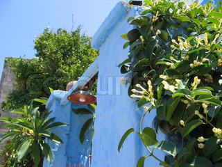 Entrance into a traditional Greek house, surrounded by blooming jasmine and frangipani